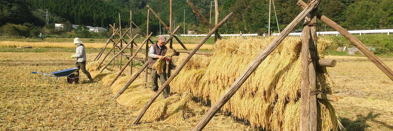 昔ながらの稲刈り体験 & ロケットストーブごはん 〜Let's エコライフ、エンジョイ釡石!〜