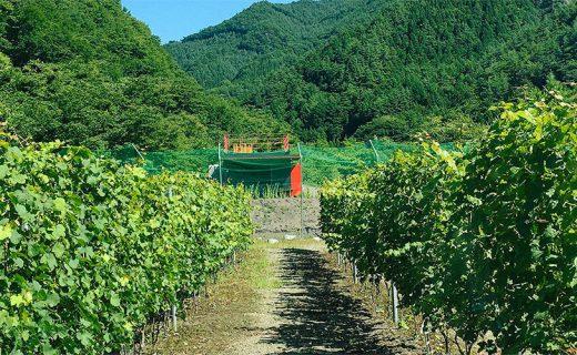 秋のあまほらヴィンヤードツアー 〜自然の営みと風土を肌で感じながらワインを傾けるひととき〜