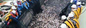 大型定置網漁見学ツアー