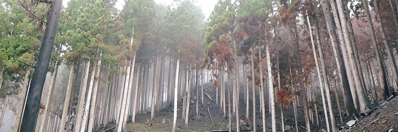 尾崎半島の森林再生・プレ植樹祭 〜山火事現場の復旧にみんなの力を!〜